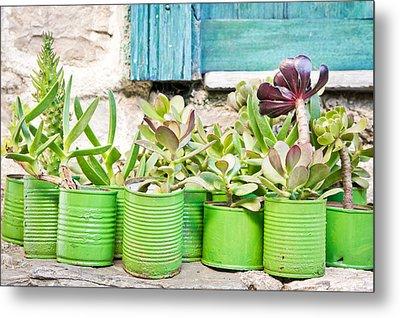 Succulent Plants Metal Print by Tom Gowanlock