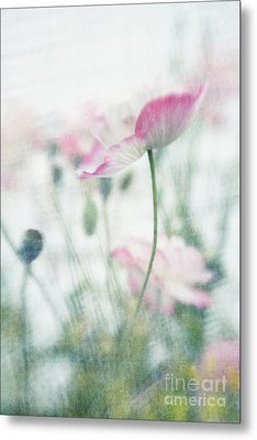 suffused with light III Metal Print