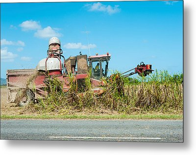 Sugar Cane Being Harvested, Lower Metal Print by Panoramic Images