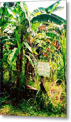 Sugarcane Metal Print by Kara  Stewart