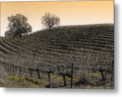 Suisun Valley Vinyards Metal Print