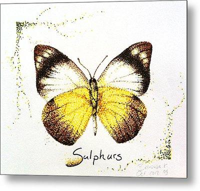 Sulphurs - Butterfly Metal Print