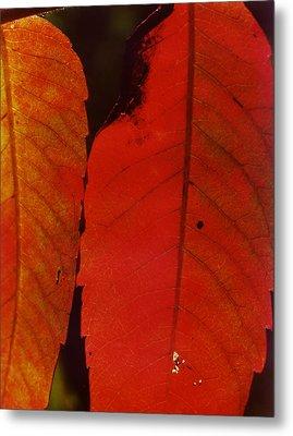 Sumac Leaves.jpg Metal Print