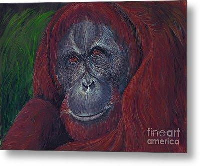 Sumatran Orangutan Metal Print