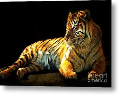 Sumatran Tiger 20150210brun Metal Print by Wingsdomain Art and Photography