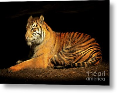 Sumatran Tiger 20150211brun Metal Print by Wingsdomain Art and Photography