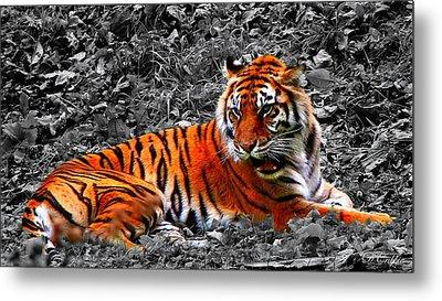 Sumatran Tiger Metal Print
