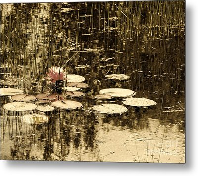 Summer Afternoon Metal Print by Marcia Lee Jones