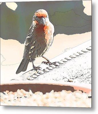 Summer Bird Metal Print by Artist and Photographer Laura Wrede