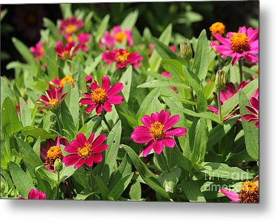 Summer Blossoms Metal Print by Theresa Willingham