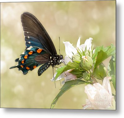 Summer Butterfly Metal Print by Sari ONeal