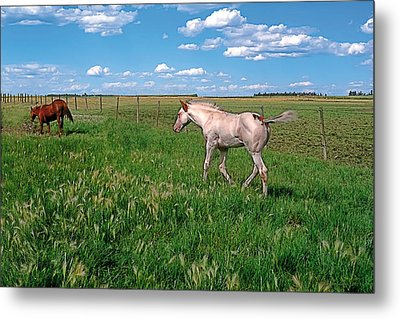 Summer Colt Metal Print by Terry Reynoldson