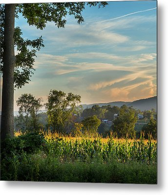 Summer Corn Square Metal Print