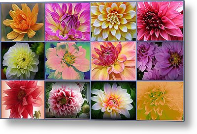 Summer Time Dahlias Metal Print by Dora Sofia Caputo Photographic Art and Design