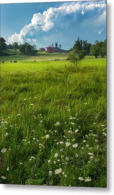 Summer Days Metal Print by Bill Wakeley