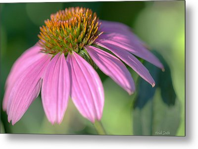 Summer Days End Metal Print by Heidi Smith