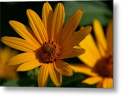 Summer Delight Metal Print by Denyse Duhaime