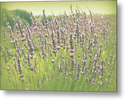 Summer Dreams Metal Print by Lynn Sprowl
