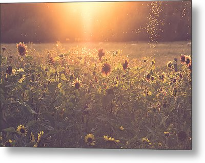 Summer Evening Metal Print by Chris Fletcher