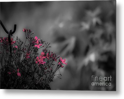 Metal Print featuring the photograph Summer Fleeing by Brenda Bostic