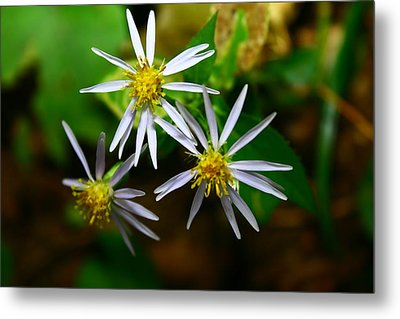 Summer Flowers Metal Print by Paula Brown