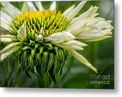 Summer Garden 1 Metal Print by Susan Cole Kelly Impressions
