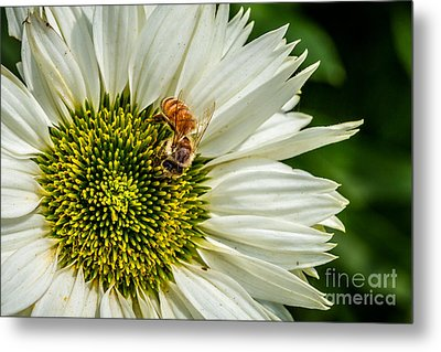 Summer Garden 3 Metal Print by Susan Cole Kelly Impressions