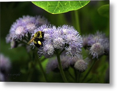 Summer Harvest Metal Print by Yvonne Wright