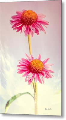 Summer Impressions Cone Flowers Metal Print by Bob Orsillo