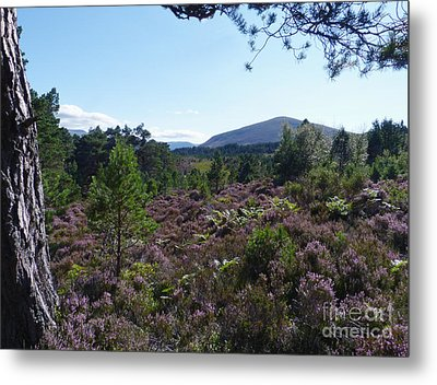 Summer In Abernethy Forest Metal Print