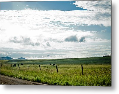 Summer In The Country Metal Print by Swift Family