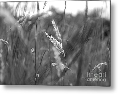 Summer Metal Print by Jay Nodianos