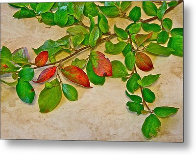 Summer Leaves Metal Print