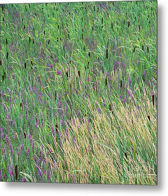 Metal Print featuring the photograph Summer Marsh by Alan L Graham