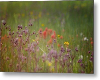 Metal Print featuring the photograph Summer Meadow by Ellen Heaverlo