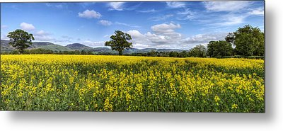 Summer Meadow Metal Print by Ian Mitchell