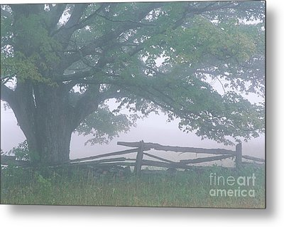 Metal Print featuring the photograph Summer Morning Fog by Alan L Graham