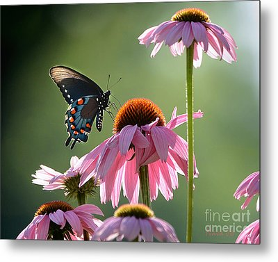 Summer Morning Light Metal Print