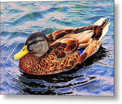 Summer Swim Metal Print by Denyse Duhaime