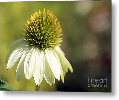Summer White Metal Print