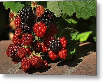 Summer's Bounty Metal Print by Donna Kennedy