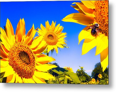 Summertime Sunflowers Metal Print by Bob Orsillo