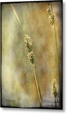 Metal Print featuring the photograph Summr Grasses V by Chris Armytage