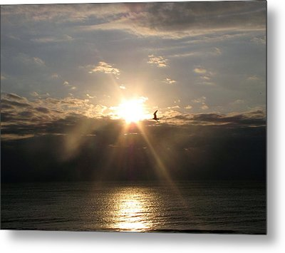 Sun And Gull Metal Print by Melissa Stoudt
