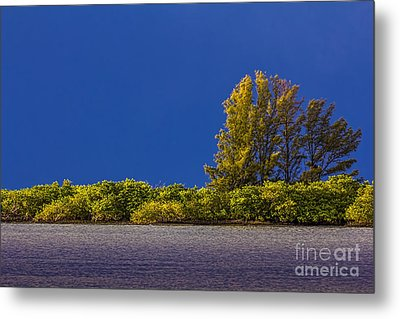 Sun Bathed Metal Print by Marvin Spates