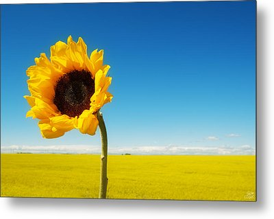 Metal Print featuring the photograph Sun Drenched Dreams by Lisa Knechtel