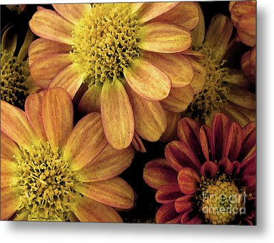 Metal Print featuring the photograph Sun Fans by Jean OKeeffe Macro Abundance Art