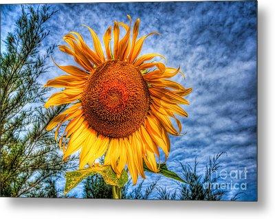 Sun Flower Metal Print by Adrian Evans