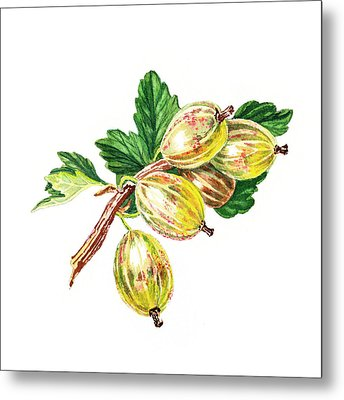 Sun Kissed Gooseberries Branch Metal Print by Irina Sztukowski