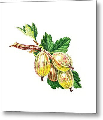 Sun Kissed Green Gooseberries Metal Print by Irina Sztukowski